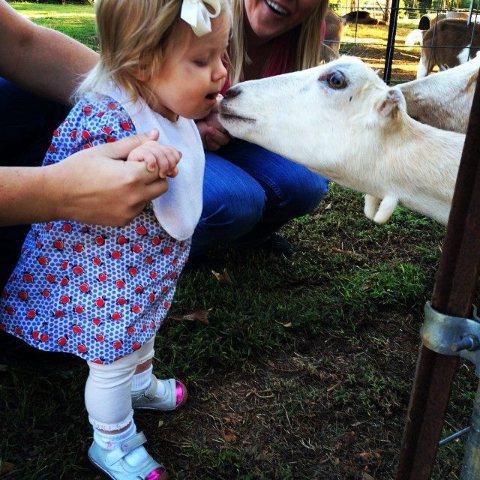 Possum Kingdom Kreamery: A Grade A goat milk dairy and a